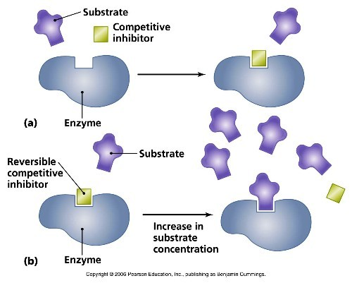 10 Interesting Enzyme Facts My Interesting Facts
