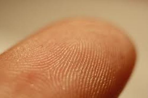 Fingerprints 10 Interesting Fingerprint Facts