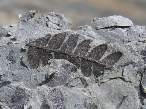 Fossil Look