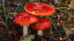 10 Interesting Fungi Facts