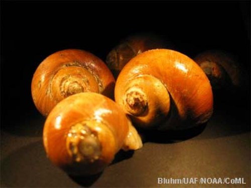 10 Interesting Gastropods Facts My Interesting Facts