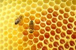 10 Interesting Honey Facts