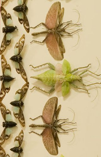 Jennifer Angus Insects