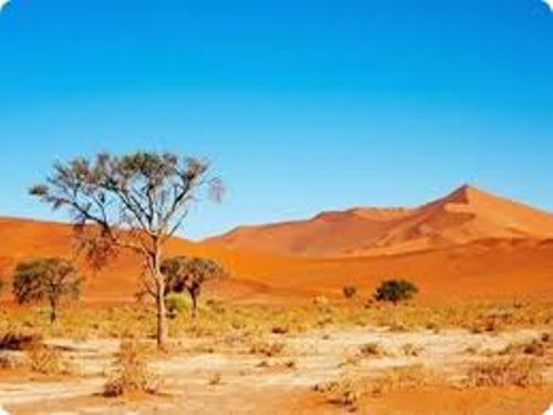 10 Interesting the Kalahari Desert Facts | My Interesting ...
