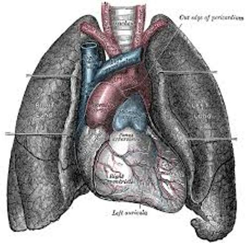 Lung Pic