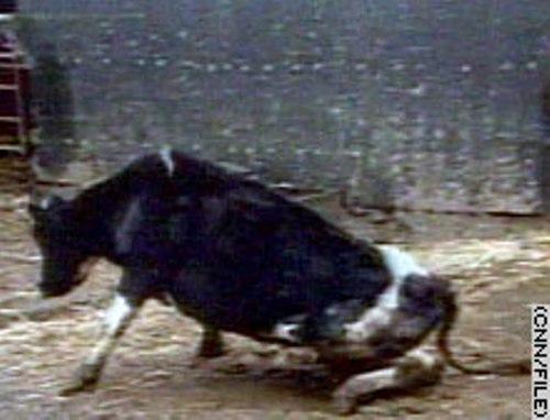 Mad Cow Disease on Cattle
