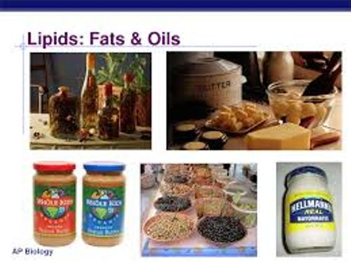 lipid facts