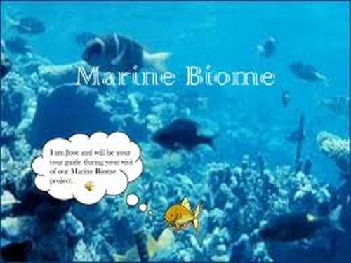 Pictures Of The Marine Biome 50