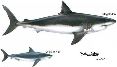 Megalodon Facts