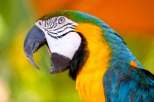 Parrot Pic