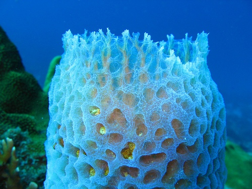 10 Interesting Porifera Facts My Interesting Facts