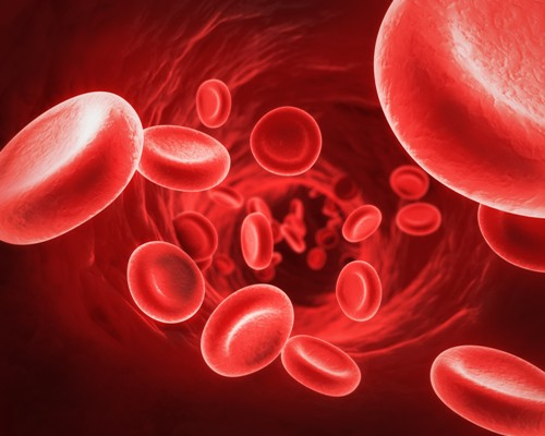 Red Blood Cell Facts