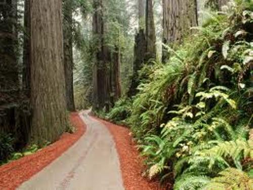Redwood National Park Facts