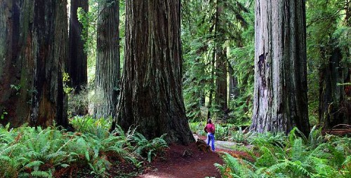 Redwood National Park Pic