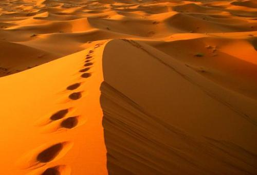 Sahara Desert Facts