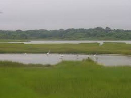 Salt Marsh Facts