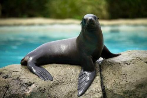 Sea Lion Picture