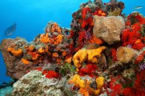 Sea Sponge Colors