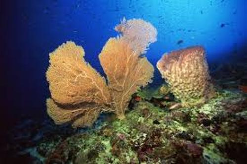 Sea Sponge Facts