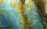 10 Interesting Seaweed Facts