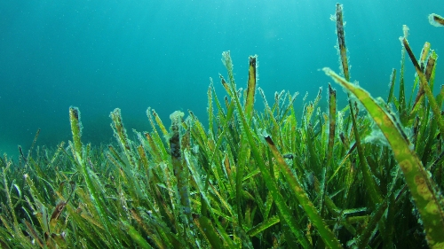 10 Interesting Seaweed Facts My Interesting Facts