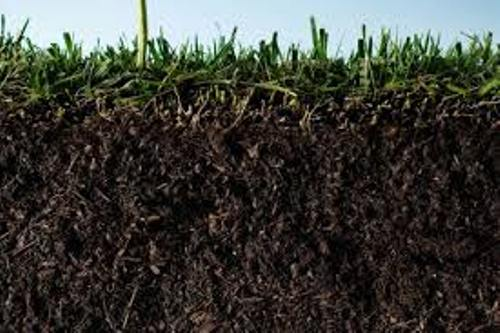 10 interesting soil facts my interesting facts for Soil information in english