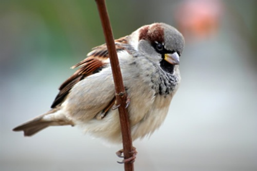 Sparrow Beauty