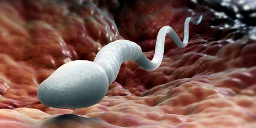 Facts about Sperm
