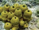 10 Interesting Sponge Facts