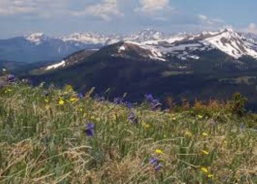 Facts about The Alpine Tundra