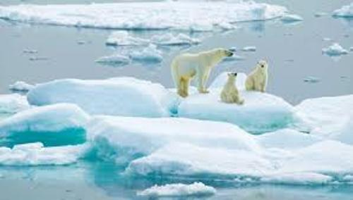 The Arctic Ocean and Bears