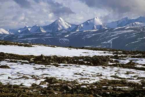 The Arctic Tundra Facts