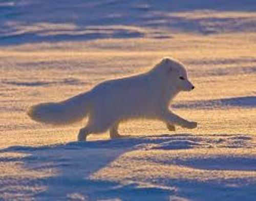 The Arctic Tundra Image