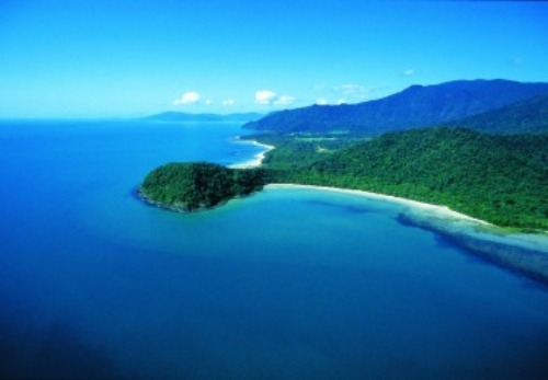 The Daintree Rainforest Beauty