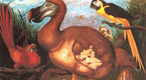 Dodo Bird Facts