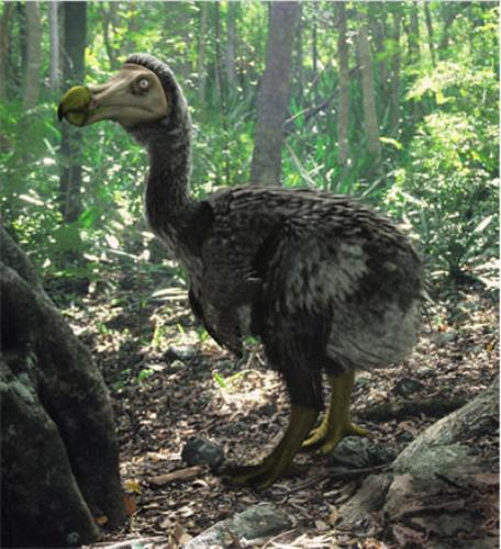 Facts about Dodo Bird