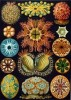 10 Interesting Ernst Haeckel Facts