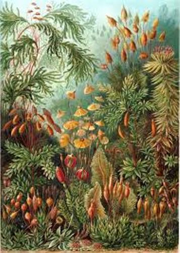 Ernst Haeckel Pictures