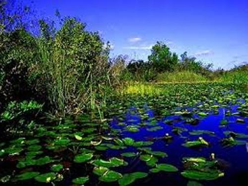 Florida Everglades Facts