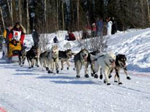 The Iditarod Race Pic