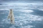 10 Interesting the North Pole Facts