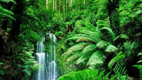 the rainforest biome facts