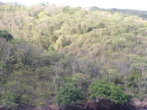 the tropical dry forest