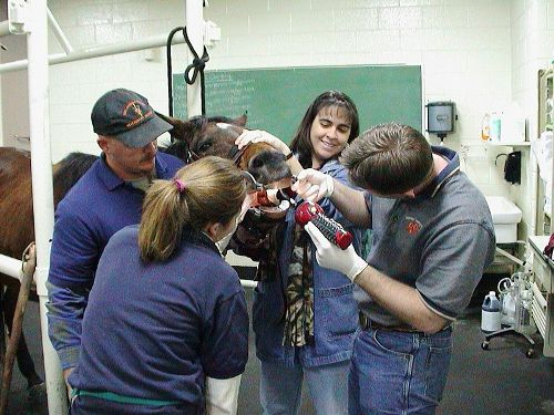 Veterinarian Training