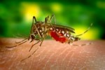 10 Interesting Yellow Fever Facts