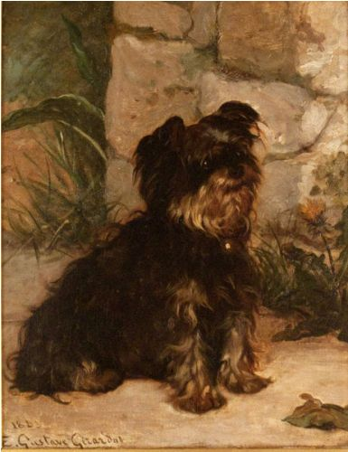Yorkie Images