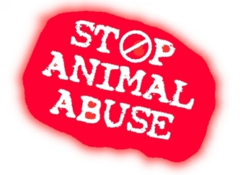 Animal Rights Slogan
