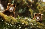 10 Interesting Tree Kangaroo Facts