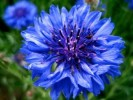 10 Interesting Flower Facts