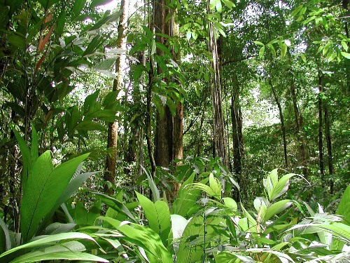 Plants in Amazon Rainforest